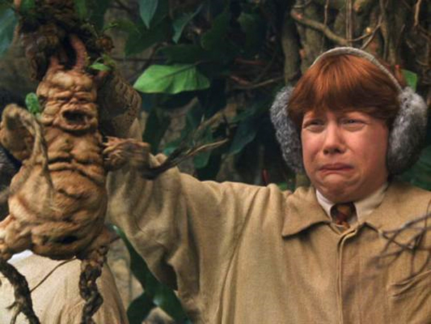 mandragora-harry-potter