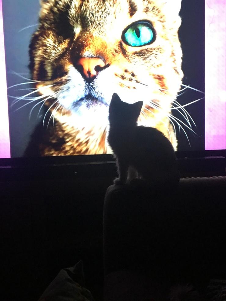 CatKitten